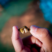 A small crab is found while snorkeling at Pass-A-Grille Beach.