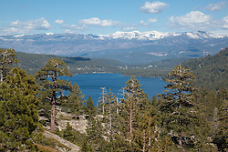 """""""Trees at Donner Lake"""" - These pine trees were photographed above Donner Lake. The town of Truckee, California can be seen in the distance."""
