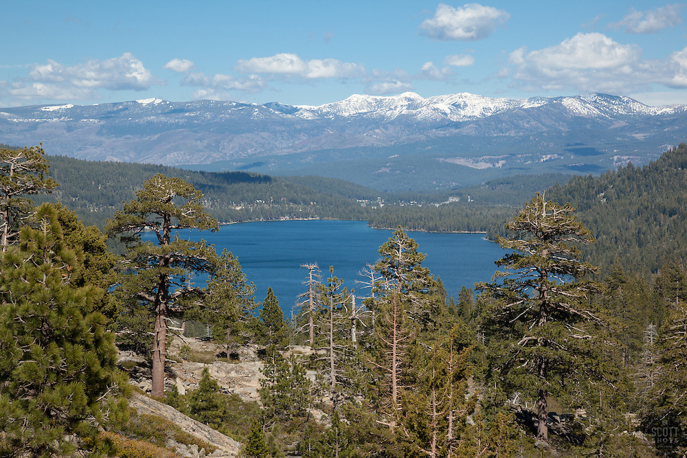 """Trees at Donner Lake"" - These pine trees were photographed above Donner Lake. The town of Truckee, California can be seen in the distance."