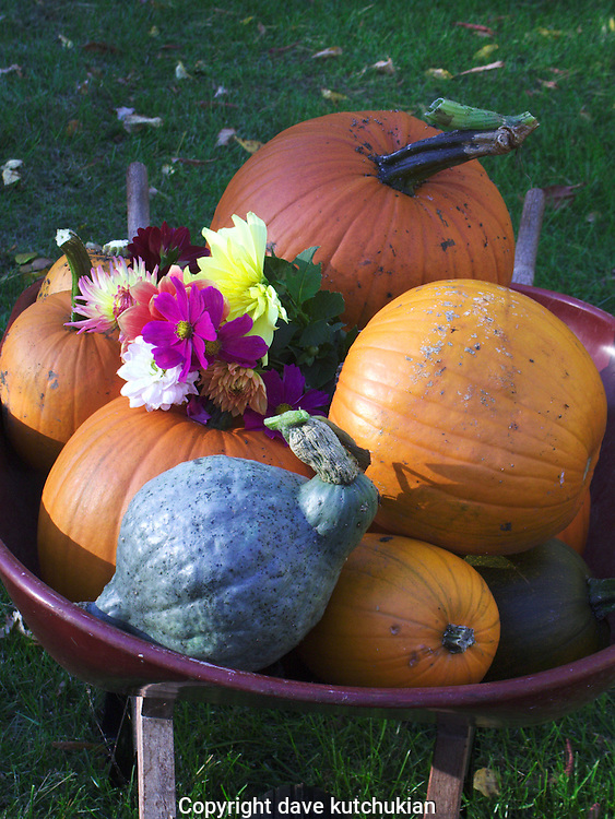 harvest from the garden in fall no property release