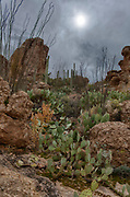 Beautiful desert landscape with cacti vegetaition in The Superstitions, Arizona