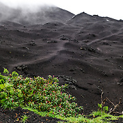 The summit of Pacaya Volcano isnow mostly covered in dark gray volcanic gravel with only a few small patches of plantlife managing to grow. Pacaya is an active volcano that forms part of the Central America Volcanic Arc. It forms a popular tourist destination easily accessible from Antigua and Guatemala City. Situated within the Pacaya National Park, it rises to 2,552 metres (8,373 ft). Its last major eruption, which caused considerable damange to nearby villages and reshaped the summit, was in May 2010. That eruption and scattered volcanic ash over much of the nearby area, prompting school closings and emergency evacuations and cleared much of the vegetation near the top of the mountain.