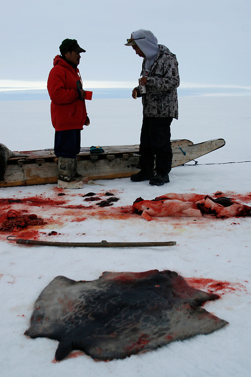 Sasa Samson 37 and PJ 17 cutting and eating the raw liver of a Seal in Resolute bay Tuesday June 12 2007....The Inuit?s hunting seals for food, every part of the seals is used or for food or for worm cloth...