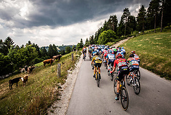 Peloton near Medvedje brdo during 3rd Stage of 26th Tour of Slovenia 2019 cycling race between Zalec and Idrija (169,8 km), on June 21, 2019 in Slovenia. Photo by Vid Ponikvar / Sportida