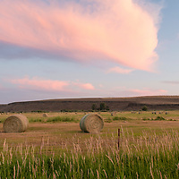 Round hay bales in a mowed grass field at sunset in Eastern Oregon near the town of Diamond.