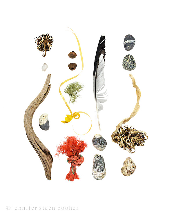 From top to bottom, left to right: kelp holdfast, Dog Whelk (Nucella lapillus), driftwood, beach stone, acorns (possibly Quercus rubra), Old Man's Beard lichen, balloon with ribbon, knot of polypropylene fishing rope, feather (probably Herring Gull), beach stones, kelp holdfast, Waved Whelk (Buccinum undatum)