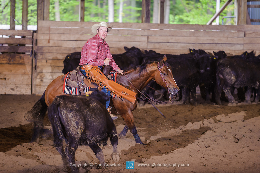 May 21, 2017 - Minshall Farm Cutting 4, held at Minshall Farms, Hillsburgh Ontario. The event was put on by the Ontario Cutting Horse Association. Riding in the 5,000 Novice Horse Class is Trent Schade on Elseware owned by the rider.