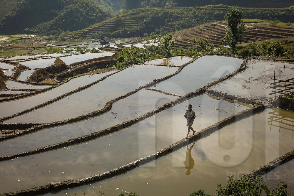Young Vietnamese boy walks along the barrier between terraces, Yen Bai Province, Northern Vietnam, Southeast Asia