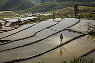 Young Vietnamese boy walks along the barrier between terraces, Yen Bai Province, Northern Vietnam, Southeast Asia