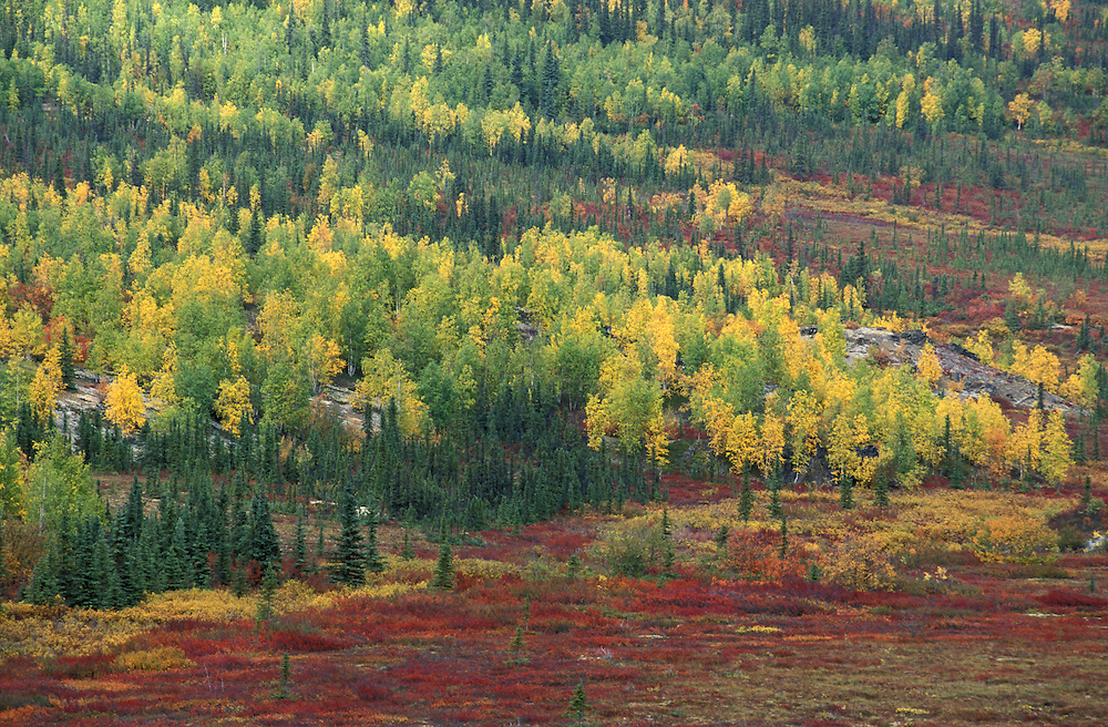 Tundra along Dalton Highway Fall Foliage Brooks Range, Alaska, USA