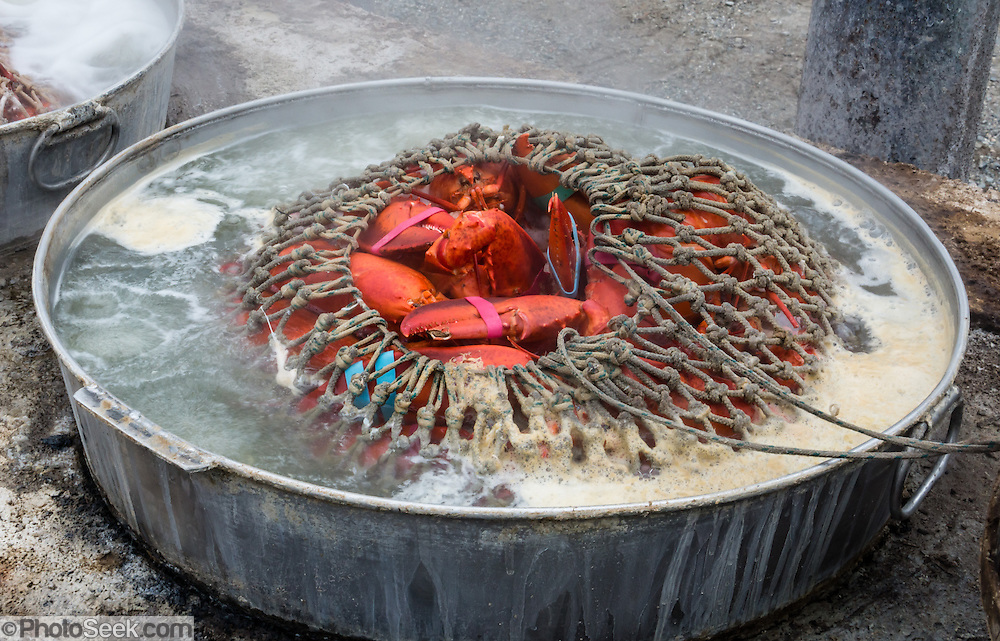 Netted lobsters boil in fresh, clean seawater over a wood fire at Trenton Bridge Lobster Pound, in Trenton, Maine, USA. Trenton Bridge Lobster Pound serves delicious seafood, highly recommended. Address: 1237 Bar Harbor Rd, Trenton, ME 04605. Phone (207) 667-2977.