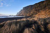 Morning light at Lime grass at Víkurfjara Beach, Vík South Iceland.