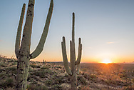 Saguaro National Park in Tucson, Arizona.