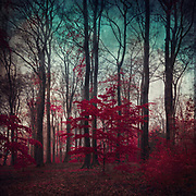 enchated forest - manipulated and textured photograph<br /> Society6 : https://bit.ly/2Hp4BHh<br /> Redbubble: https://rdbl.co/2qkhtY7