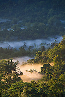 Dawn mist and sunshine highlight a single tree in the ainforest canopy of Seram, Indonesia, amidst an untouched sea of green. Conservation photography by Djuna Ivereigh.