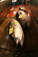 Mar 4, 2006; Tokyo, JPN; Tsukiji.Fresh tuna for sale at the Tsukiji Fish Market...Photo credit: Darrell Miho