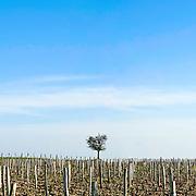 Vineyard at Sancerre in the Loire Valley