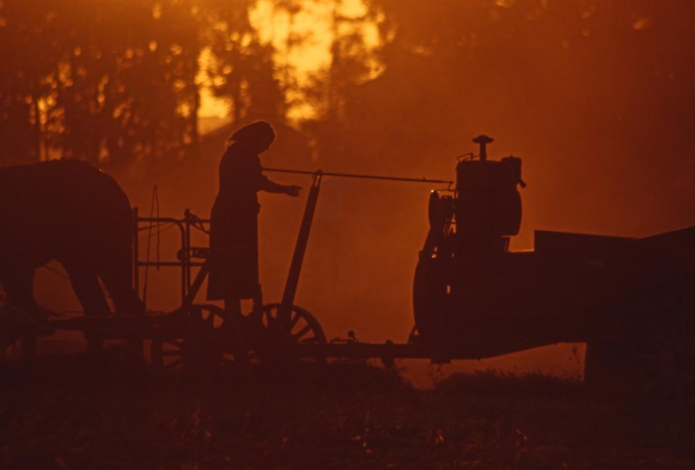 Amish woman runs farm hay baler at sunset, Lancaster County, PA