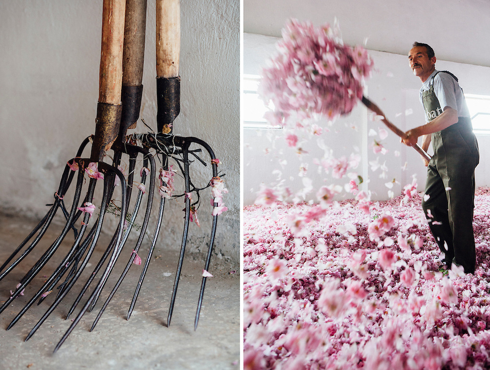 Mehmet Cetinkaya, 53 years old, airs the rose petals as they are left to dry on the factory floor. He has worked at the Sebat factory for 16 years. His son also works at the factory.