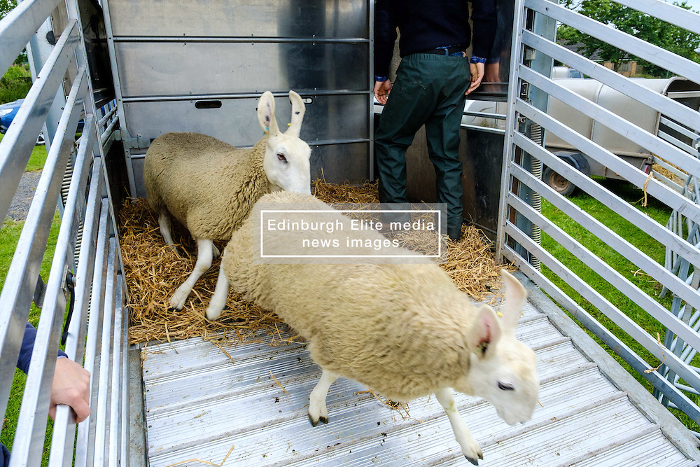 Biggar, South Lanarkshire, Scotland 23 July 2016<br /> <br /> Sheep arriving at the showground<br /> (c) Andrew Wilson | Edinburgh Elite media