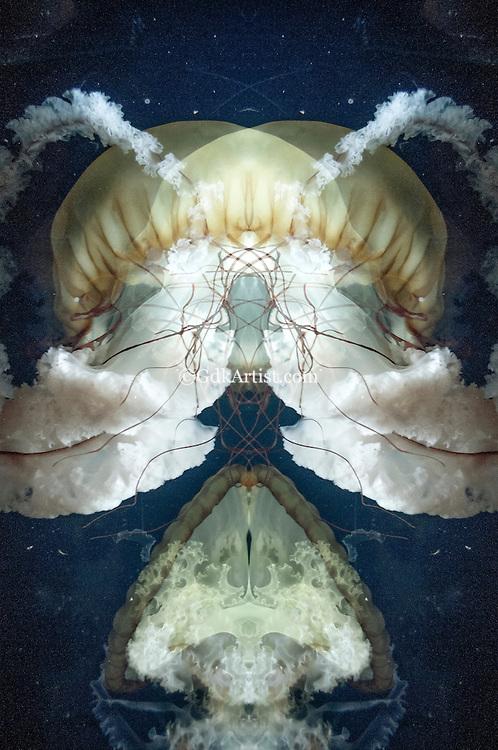 Inner Space Series 14
