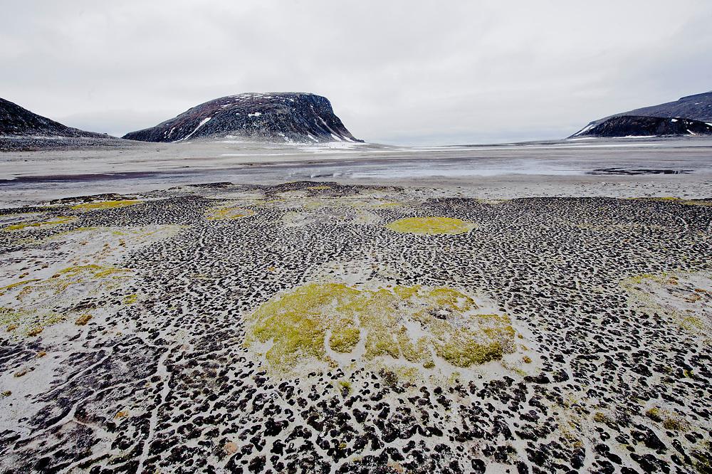 Fragile arctic vegetation on the beach of Phippsøya, part of the Seven Island north of Nordaustlandet, Svalbard.