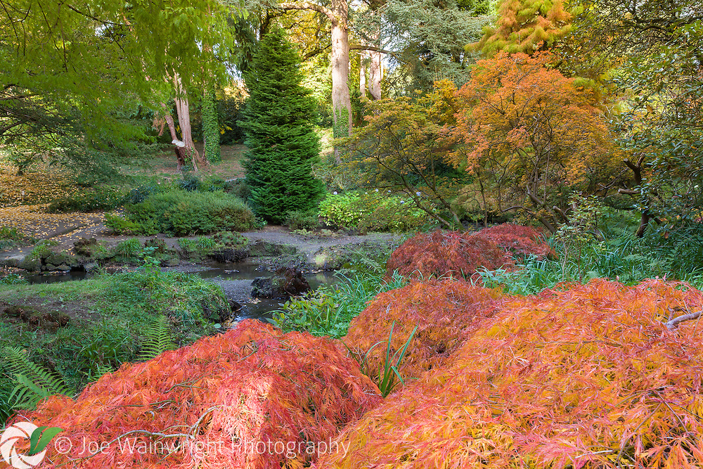 Autumn colours in The Dell at Bodnant Garden, North Wales - photograped in October