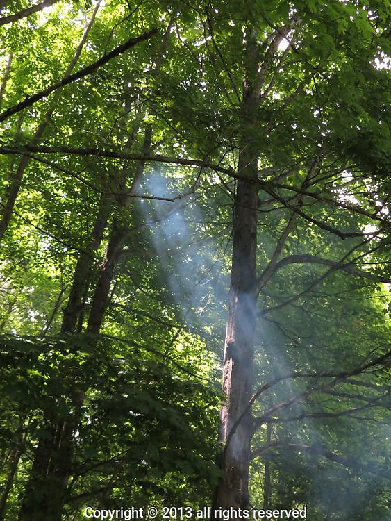 SUN AND SMOKE THROUGH SPRING GREEN, E. DORSET, VT