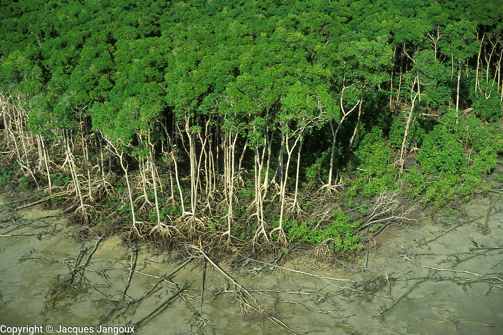 Aerial of mangrove swamp forest at low tide along Atlantic coast , east of Amazon estuary, Para State, Brazil.