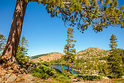 """Penner Lake 1"" - Photograph of a tree at Penner Lake in the back country of the Tahoe National Forest."