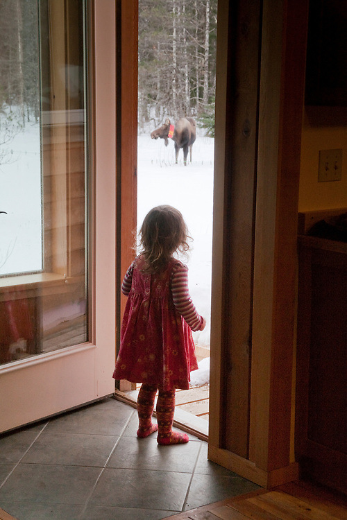 A young girl, colorfully dressed, watches a moose (Alces alces) browse willow in her meadow from the warmth of her home.