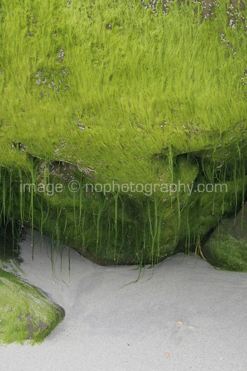 Seaweed on Inis Oirr beach the Aran Islands Galway Ireland