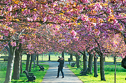 © Licensed to London News Pictures. 10/04/2019.<br />