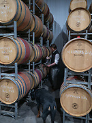 Nick Knappstein drawing a sample from barrel. Winston, the winery Rottweiler supervises