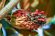closeup of a flower with orange and red seeds