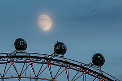 © Licensed to London News Pictures. 19/12/2018. London, UK. The moon rises over the London Eye. Photo credit : Tom Nicholson/LNP