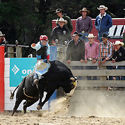 Jimmy Booth from Fairlie in action during the Open Bull Ride competition at the Southland Rodeo, Invercargill,  New Zealand. 29th January 2012