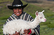 Alpaca baby & Marco Wifrido Cando Chango (13 Years old) who works on a hacienda - living alone - looking after alpacas<br /> Alpaca<br /> Lama pacos<br /> base of Cotopaxi Volcano<br /> Andes. ECUADOR.  South America