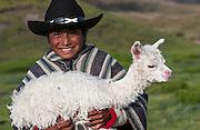 Alpaca baby & Marco Wifrido Cando Chango (13 Years old) who works on a hacienda - living alone - looking after alpacas<br /> Alpaca<br /> Lama pacos<br /> base of Cotopaxi Volcano<br /> Andes. ECUADOR.  South America