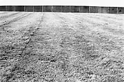 Grass and perimeter fence, Glastonbury, Somerset, 1989