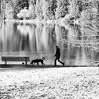 A man walking his dog in the snow with reflections on Lost Lagoon.