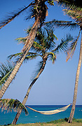 Palm trees with hammock