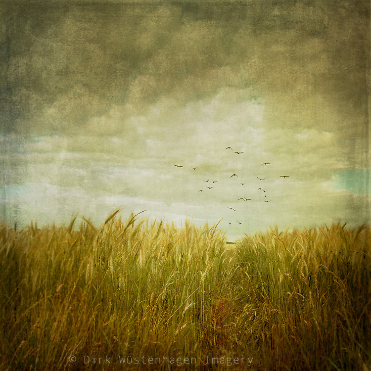 Low angle view of a field - vintage processing with textures<br />