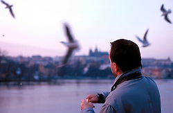 CZECH REPUBLIC PRAGUE MAR00 - A man feeds gulls at the banks of the river Vltava in Prague. . . jre/Photo by Jiri Rezac. . © Jiri Rezac 2000. . Tel:   +44 (0) 7050 110 417. Email: info@jirirezac.com. Web:   www.jirirezac.com