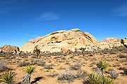 Echo Rock at Joshua Tree National Park