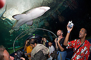 Darling Harbour. Sydney Aquarium. Underwater tunnel with sharks, rays and other fish.