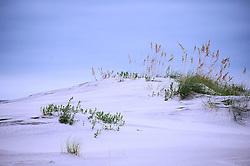 Dune Study #2, Wrightsville Beach, North Carolina