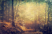Sun on a forest path on an autumn morning<br />