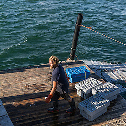 Wharf employee Gary Emerson moving bins of lobsters at Great Wass Lobster in Beals, Maine.