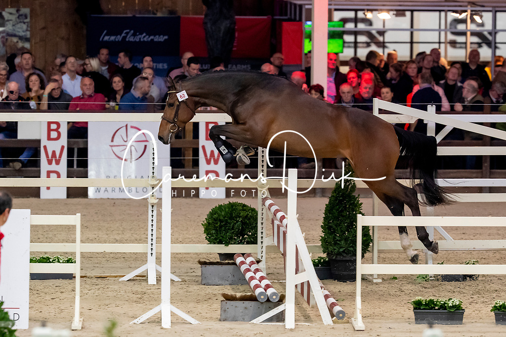 062, Rochefort AEG<br /> BWP Hengstenkeuring -  Lier 2020<br /> © Hippo Foto - Dirk Caremans<br />  17/01/2020